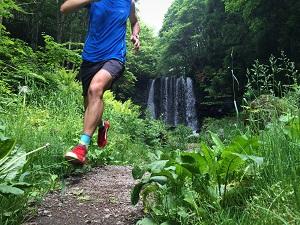 Un chemin stable vous permettra de fractionner durant votre entrainement trail. © Dollarphoto